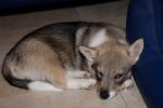 Yuno slapen - 19 juli 2013 (9304)