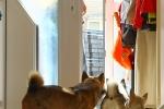 Yuno wacht keurig bij voordeur - 23-7-2013 (1366)