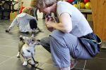 2013-08-16 - 9658 Yuno puppycursus les 1