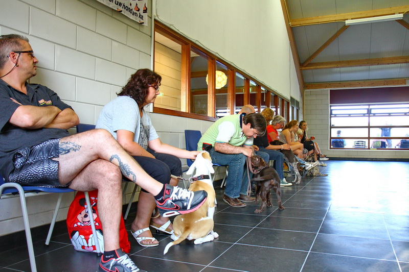 Les 2 groepsfoto, 23 augustus 2013 (1777)yuno, puppycursus, 16 weken, les 2