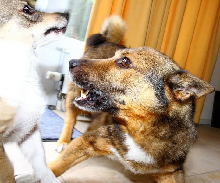 2013-08-24 - 1880 Kari & Yuno