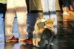 Les 3 puppycursus - 30-08-2013 (2067)