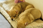 Bosse en Yuno doezelen weg, 29 juni 2013 (8506)