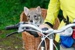 Yuno in fietsmand - 13 juli 2013 (9081)