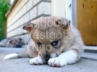 Yuno 5,5 weken oud (0856)