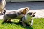Jelle en Yuno, 6 juli 2013 (8663)