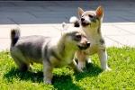 Jelle en Yuno, 6 juli 2013 (8664)