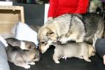 De pups stromen uit de bench 2013-05-25_9171