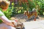 Kari wil ook even aandacht 2013-06-08_0921