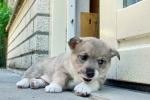Yuno ziet iets op de deur 2013-06-08_0852