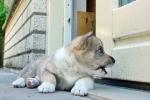 Yuno ziet iets op de deur 2013-06-08_0854