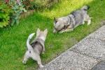 Yuno en Ronja, 6 juli 2013 (8742)