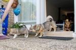 Kari, Yuno en Ronja, 6 juli 2013 (8755)